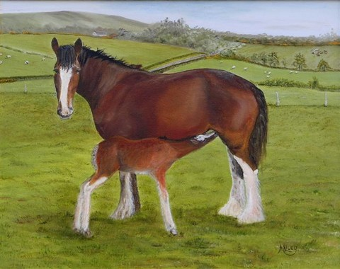 Annabel the Clydesdale mare with her foal