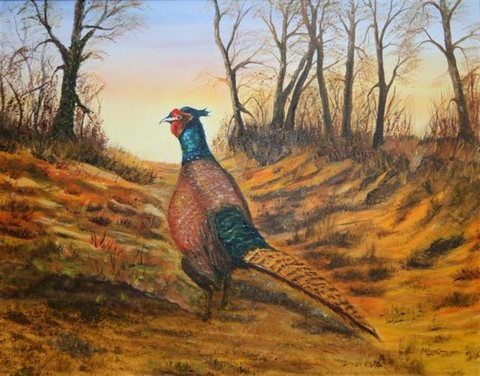 Henry the pheasant